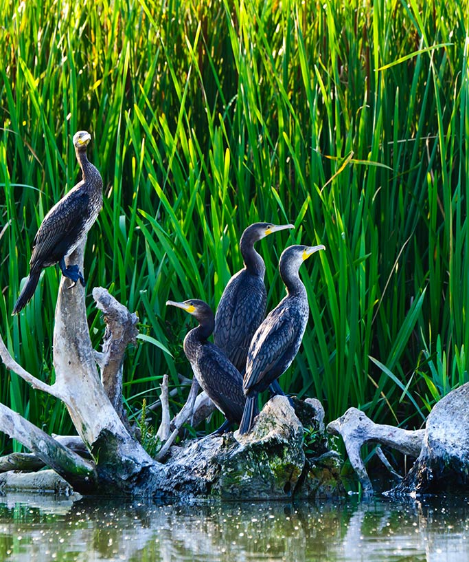 Danube Delta wildlife and vegetation